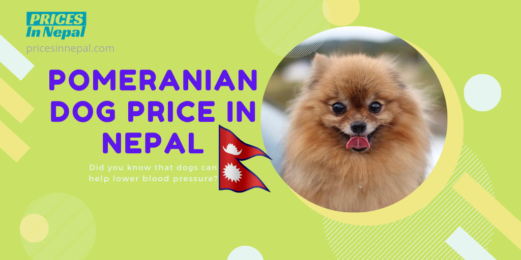 Pomeranian Dog Price in Nepal - Poms puppy price in Nepal