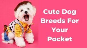Pocket Dog price in nepal and india - Small dog breeds teacup